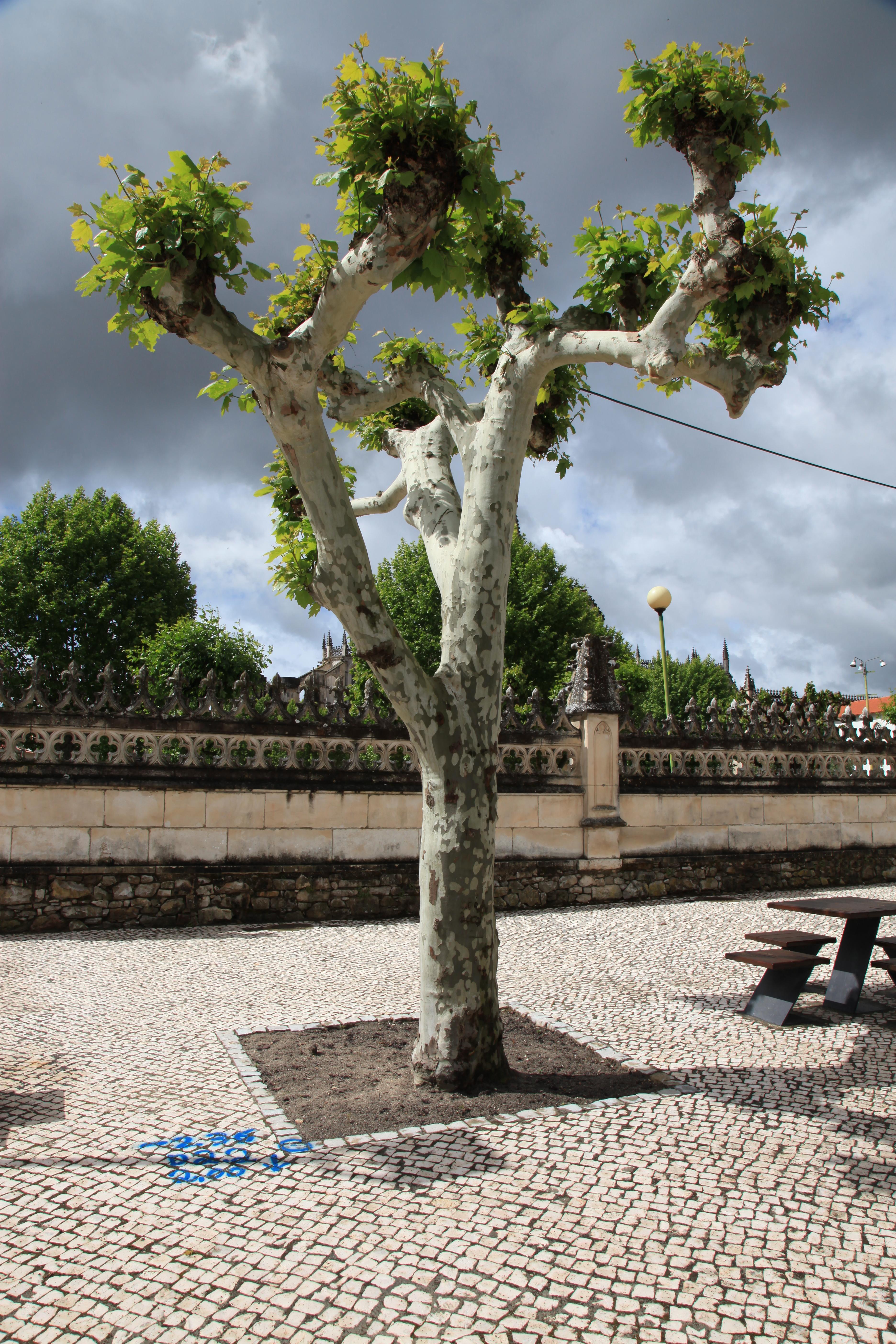 Batalha Tree