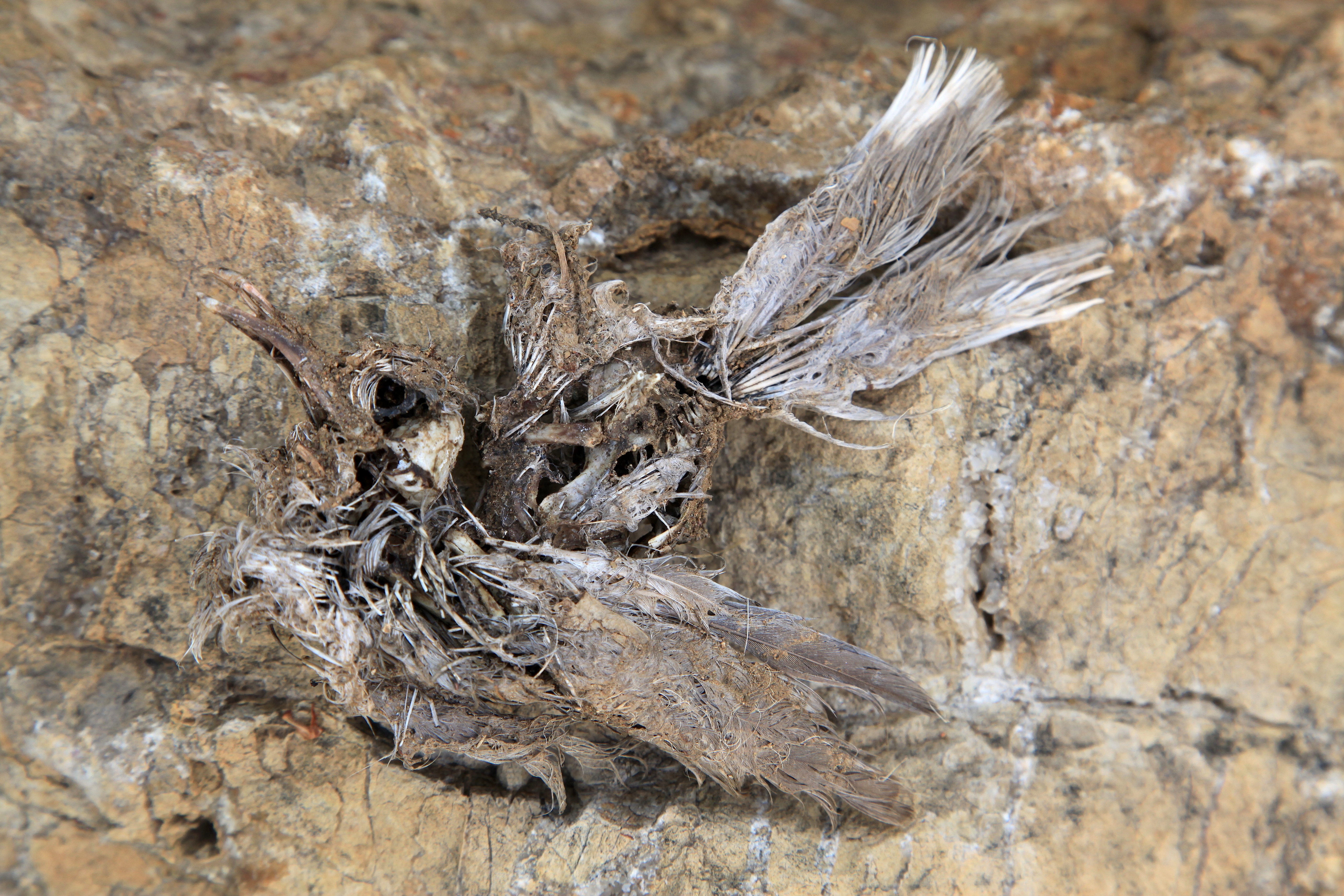 Fossilised Dead Bird