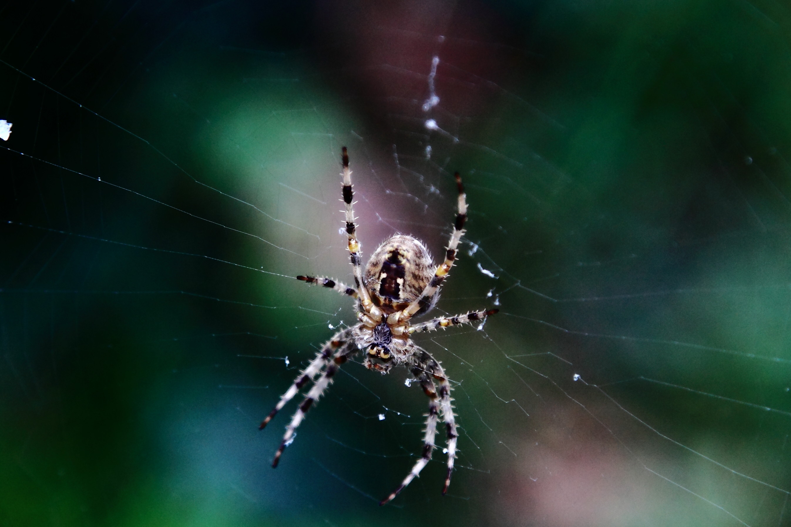 Spider in Motspur Park Copyright chris Bushe
