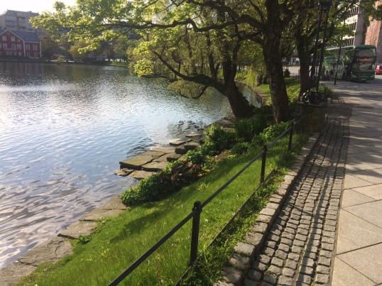 Morning walk by lake