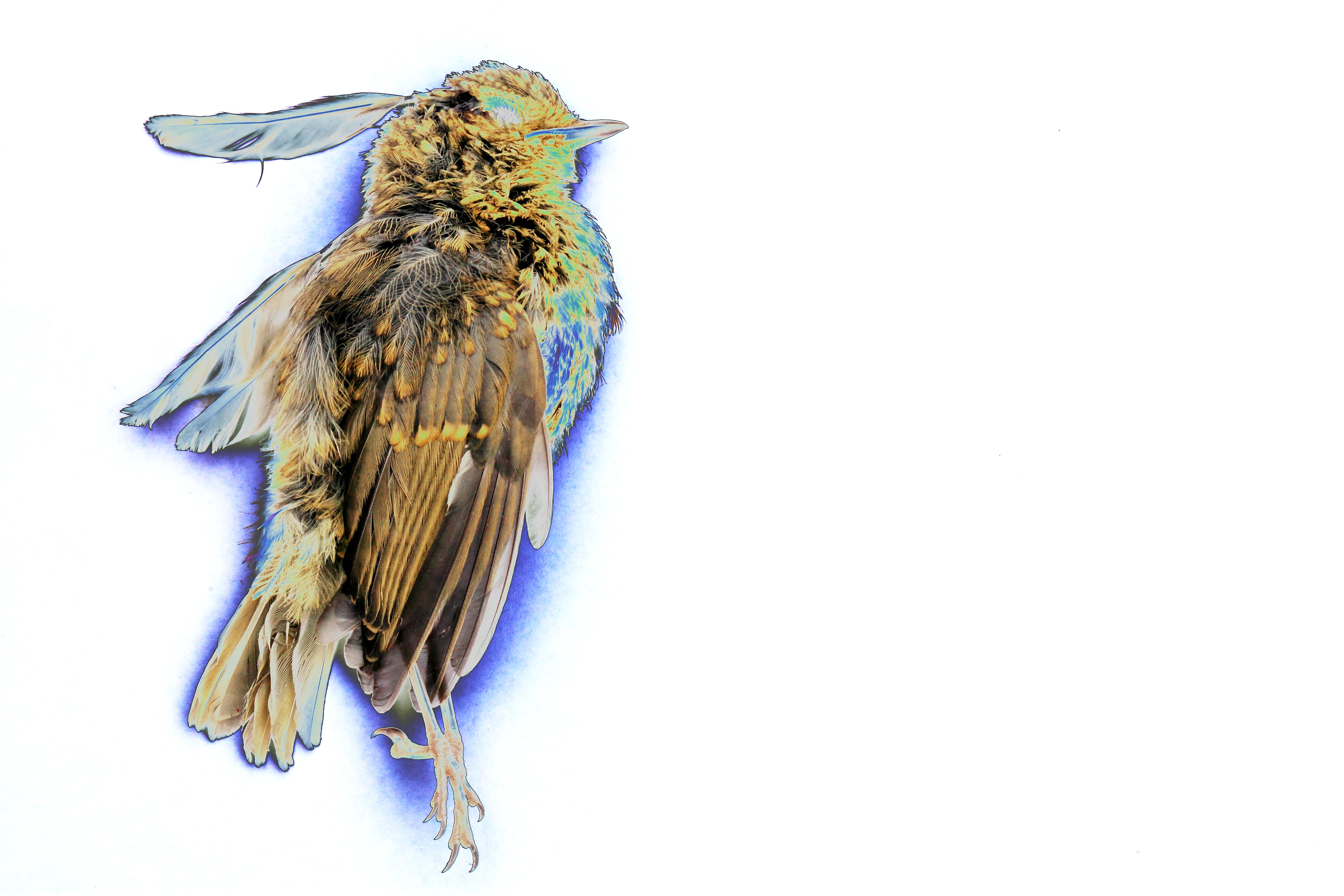 Painting of Dead Bird. Vincent Van B.