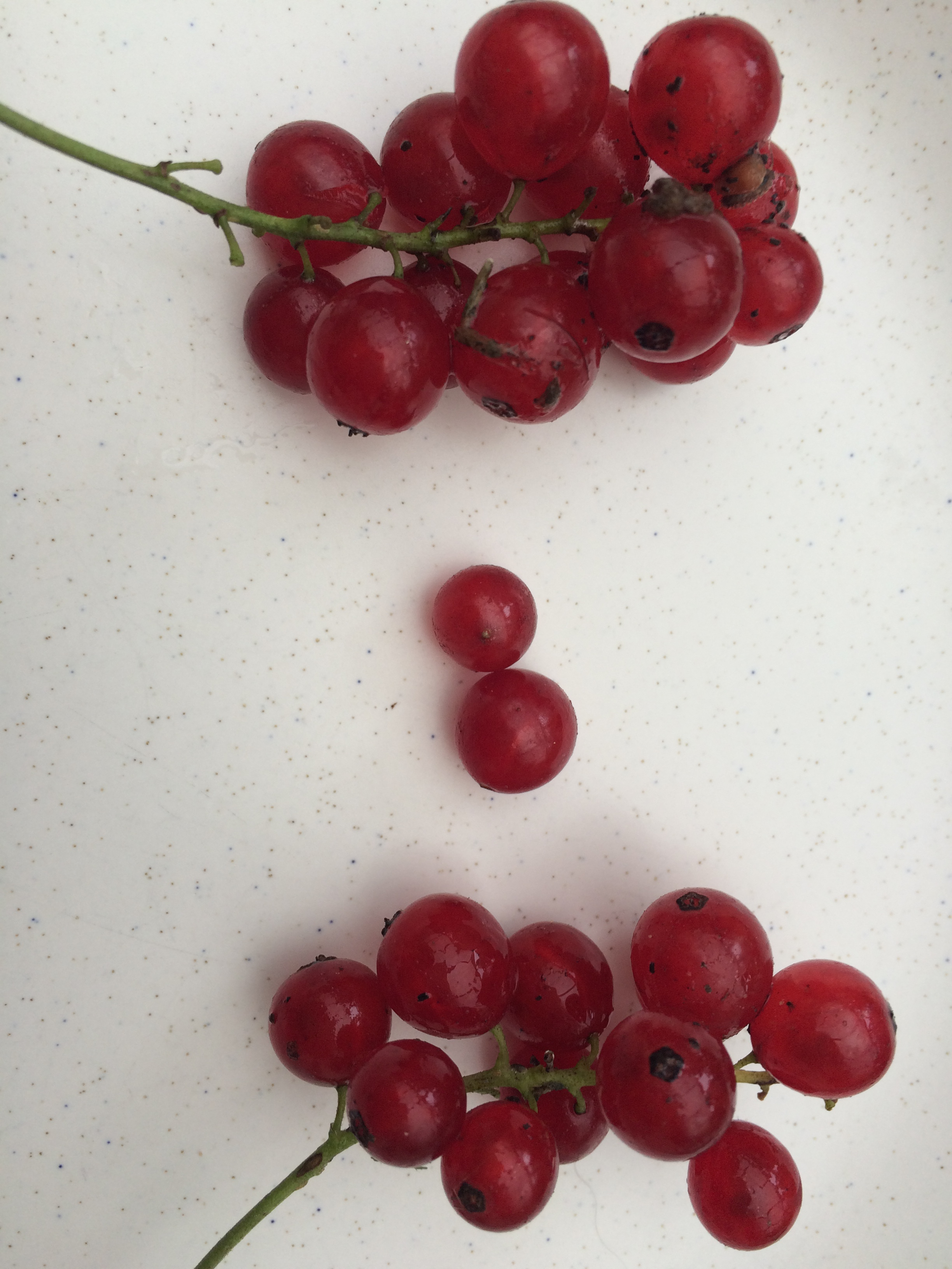 Redcurrants from surrey