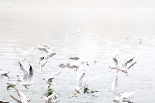 Claremont birds. Copyright Elena Bushe